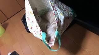 気持ちよさそうに寝るひのきは熟睡中です^^