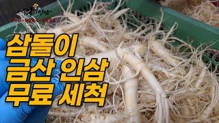삼돌이인삼 금산인삼 무료세척(korea ginseng)