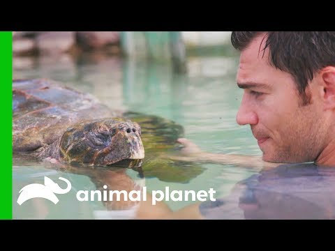 A Sea Turtle Named Tortilla Has A Buoyancy Issue | Evan Goes Wild: Passion and Purpose
