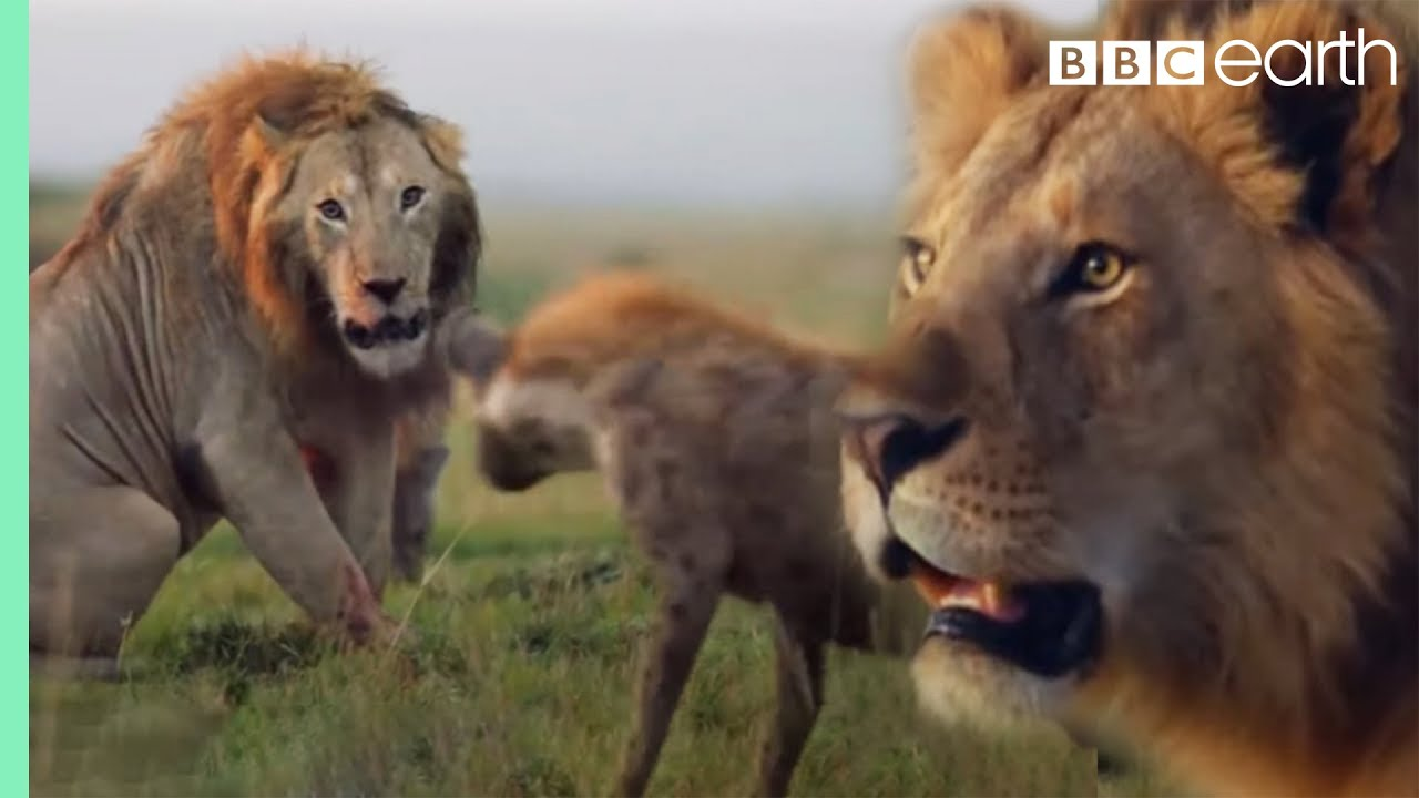 Download ONE HOUR of Amazing Animal Moments | BBC Earth