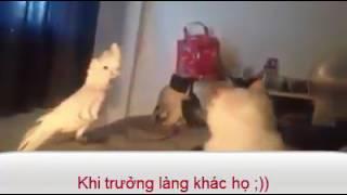 Vẹt Troll Mèo
