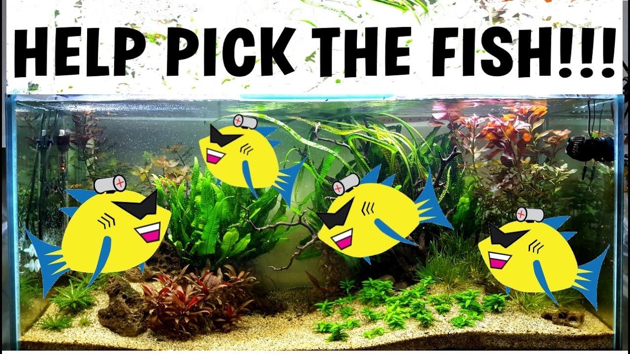 Freshwater aquarium fish help - Help Pick The Fish New Planted Aquarium Aquascaping In The Tetra Tank