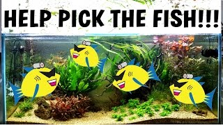 help pick the fish new planted aquarium aquascaping in the tetra tank