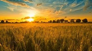 Humbling Hymns: We Plough The Fields And Scatter