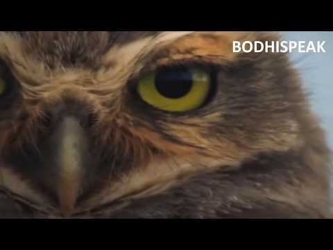 10 most angry ill tempered and ferocious animals on earth youtube