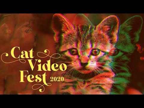Popular cat videos help animals in need