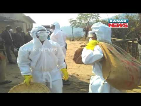 Bird Flu: Quick Response Team Starts Fowl Culling In Rourkela