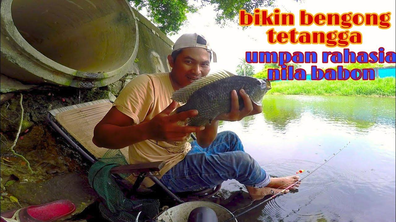 Download Rahasia Umpan Mancing Ikan Nila Babon Paling Jitu dan Murah