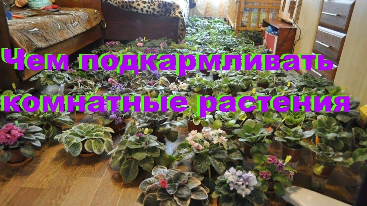 Чем подкармливать цветы домашние