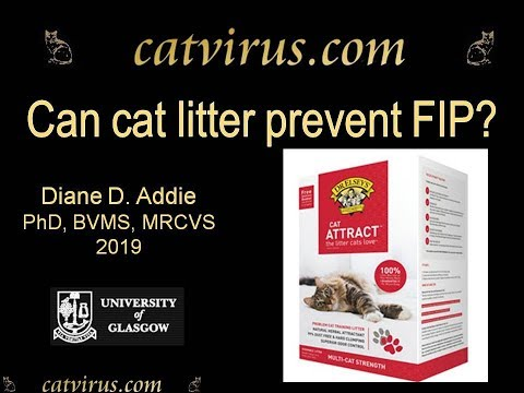 Can Cat Litter Prevent Feline Infectious Peritonitis? Dr Elsey Cat Attract Reduced Virus Load.