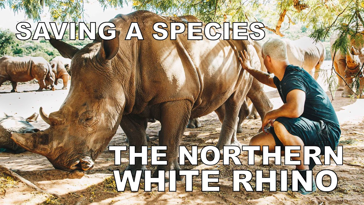 Dean Schneider - Saving the Northern White Rhino