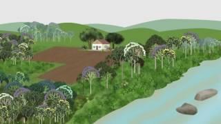 Minuto Ambiental: Cadastro Ambiental Rural