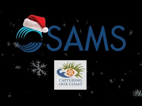 CoCoast Live Christmas Lecture | Antarctic Penguin Conservation