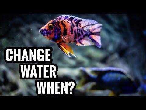 When To Change Aquarium Water