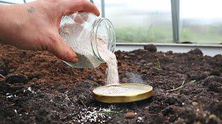 Как внесение обычной молотой яичной скорлупы осенью утраивает мои урожаи!? Яичная скорлупа осенью