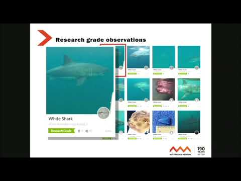M McGrouther: Australian Fishes -  A Community of Fish-spotters From Australia & New Zealand