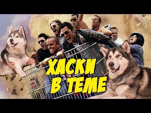Собаки встретили Jackass в Харькове   дрессировка хаски