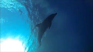 今日は獲物に恵まれず帰ろうとすると 一匹のイルカが興味を持ち 近づい...