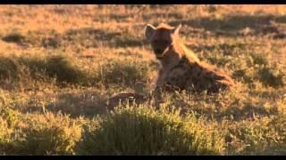 동물 74 세렝케티 3  바람의 승부사 치타
