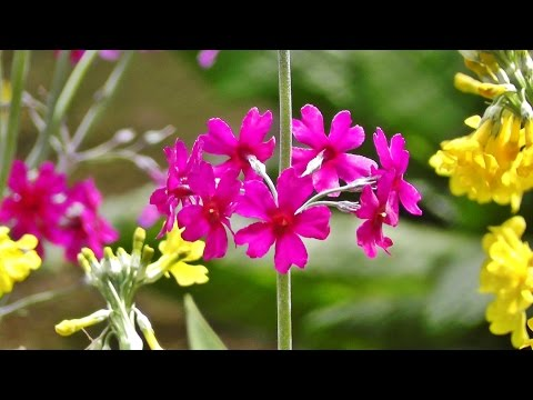 Relaxing Bird Song, Nature Sounds & Flowers for Stress Relief, Meditation, Sleep & Study