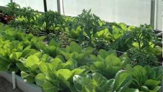 High Tunnels: What to Plant