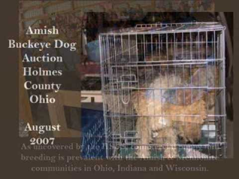 WIRE FOX TERRIER RESCUE MIDWEST - PUPPY MILL RESCUE MISSIONS - YouTube