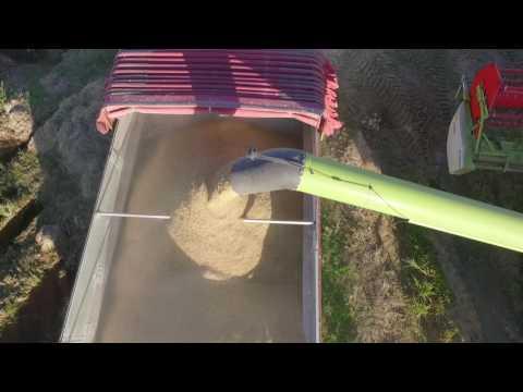 NIARSA: Cosechadora Claas 1 en vista aérea