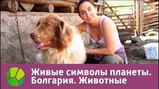 Болгария. Животные | Живые символы планеты | Живая Планета