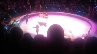 Видео про верблюдов