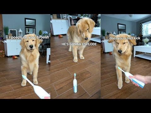 Puppy Reacts to Electric Toothbrush - Dog Vs Toothbrush