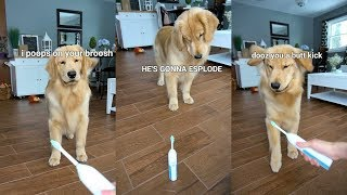 puppy-reacts-to-electric-toothbrush-dog-vs-toothbrush