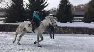 Адайские лошади мультики про лошадей horses