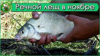 Фидерная рыбалка - ловля леща на реке в ноябре.