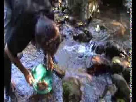 buscando oro fluvial con batea ( 2 de 2 ) ( Search golden waterway with tray )