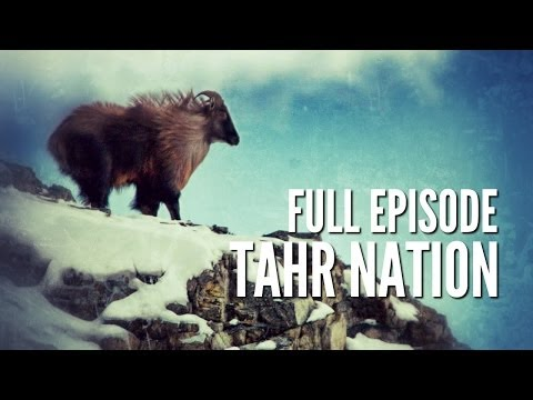 "New Zealand Tahr Hunting - ""Tahr Nation"""
