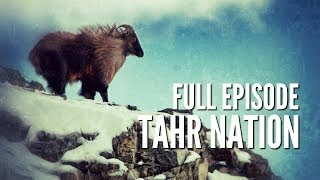 New Zealand Tahr Hunting -