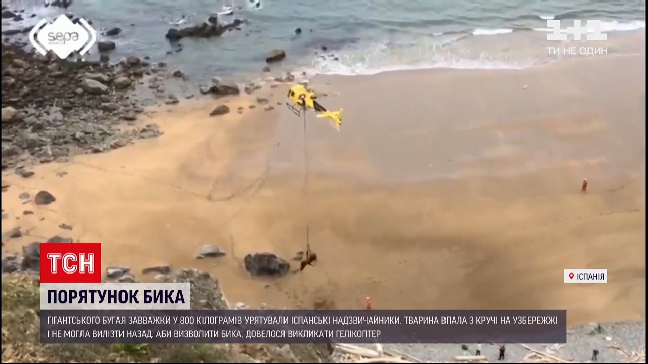 Новини світу: іспанські надзвичайники рятували бичка гелікоптером