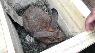 Вес кроликов в 5 месяце, выросшие на траве и сухарях.