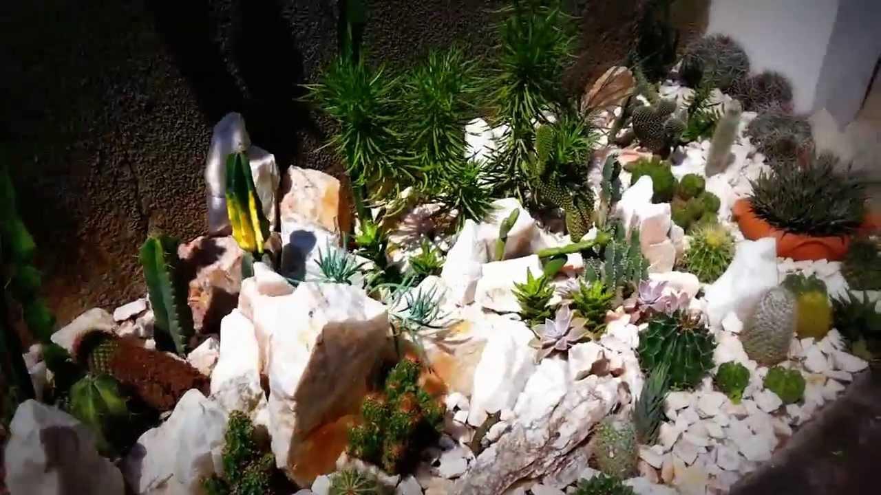 mini jardim de cactus:Mini Jardim De Suculentas