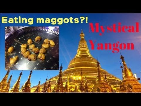 TRAVEL VLOG: Exploring Yangon, Myanmar! Crickets and maggots!