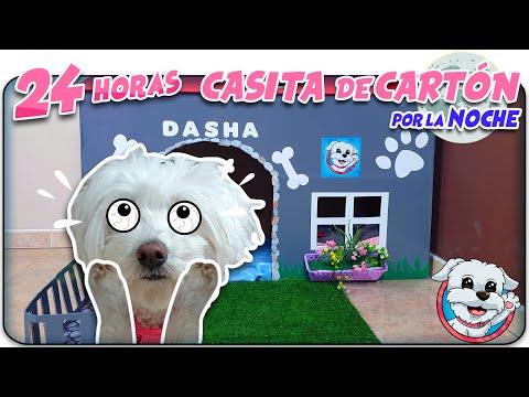 Paso 24 HORAS en mi CASITA DE CARTÓN para PERROS durante TODA LA NOCHE 🐶  Anima Dogs