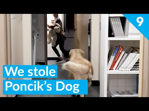 Where did you find it. Give back quickly. - We stole dog - Funny Dog Poncik