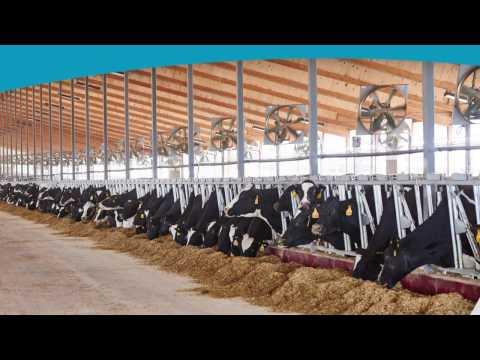 GEA Barn Equipment - Puts Cow Comfort First!