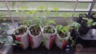 Balcony Vegetable Garden Experiment Update
