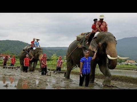تراجع قطاع السياحة في تايلاند بسبب فيروس كورونا والفيلة أول المتضررين…  - نشر قبل 3 ساعة