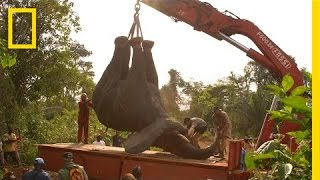 How to Move a Two-Ton Elephant to Safety | Short Film Showcase
