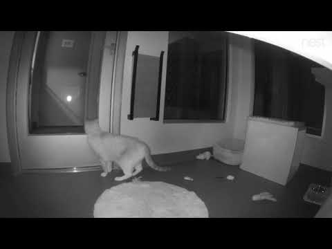 Cats Escape 'Cat Town' Nonprofit After Intruder Smashes Windows