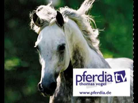 Der Angie Reitkurs - Pferde und Kinder werden Freunde