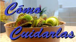 Cómo cuidar una planta Carnívora | Huerto Urbano Villarreal