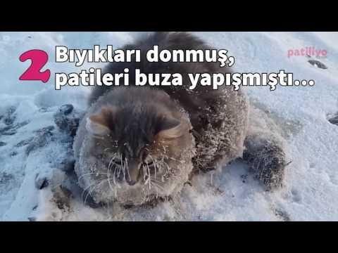 Soğuktan donacak olan kedilere sıcak bir yuva veren dünya harikası insanlar